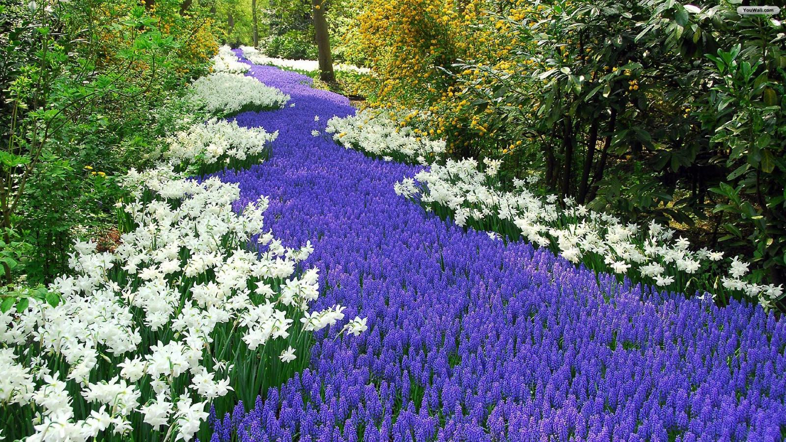 Beautiful Flower Garden Wallpaper 1600x900 Download Wallpapers Page