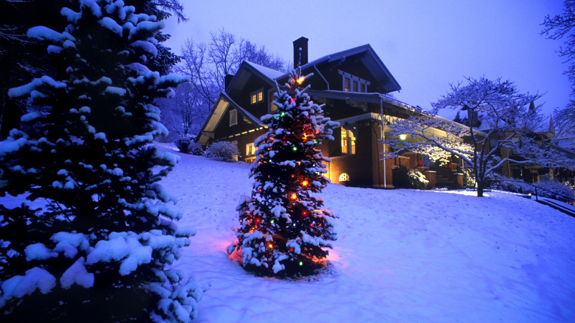 Christmas Snowy Trees Houses Wallpaper | Download cool HD ...
