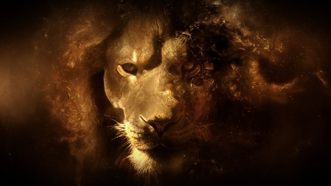 Cool Lion Hd Wallpaper Download Cool Hd Wallpapers Here