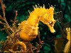 Cool Hd Seahorse Wallpaper wallpaper