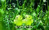 Green Android Couple Wallpaper wallpaper